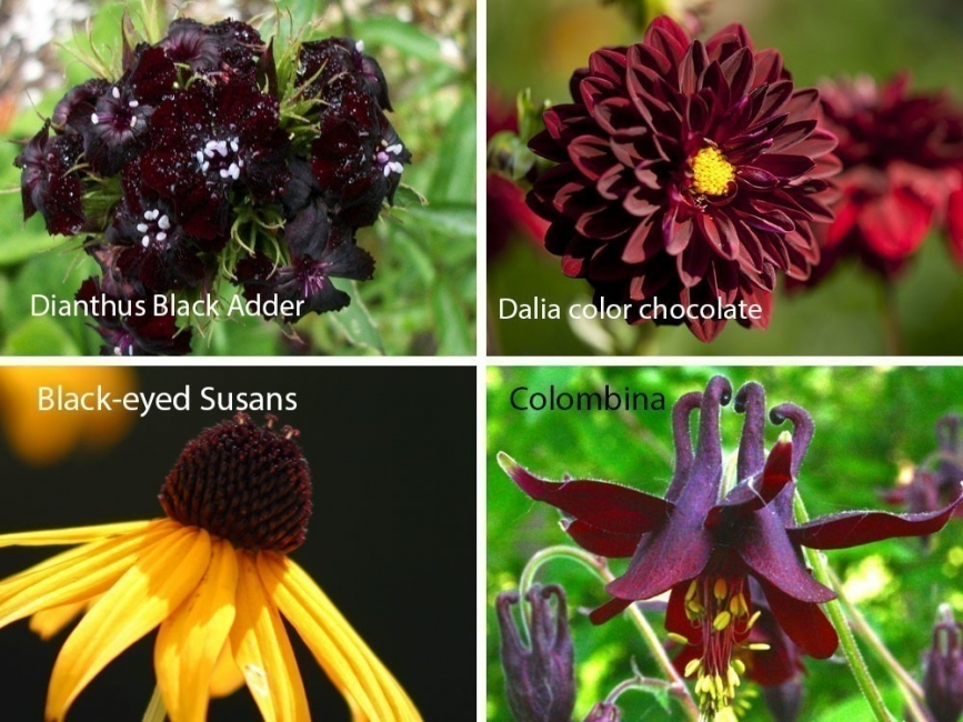 jardín de chocolate - color