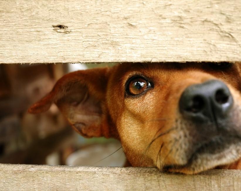 maltrato animal - perro