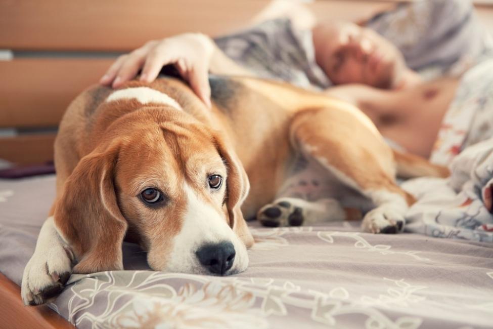 Dormir con mascotas - hombre