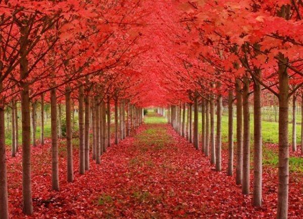 ar-tunel-arboles-de-mapple-Oregon