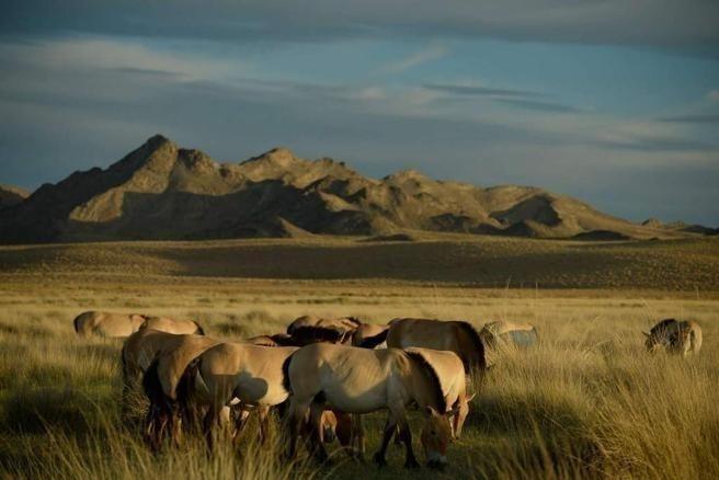 La cultura Eneolítica Botai de Asia Central proporciona la evidencia arqueológica más temprana para la cría de caballos