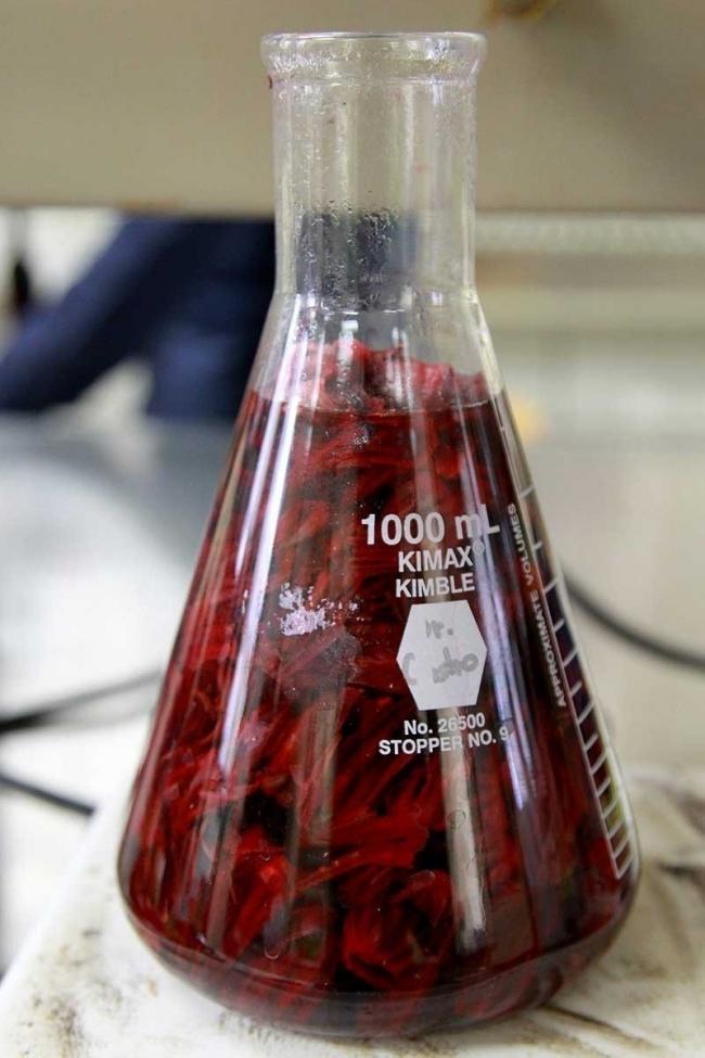 Agua de Jamaica en Laboratorio