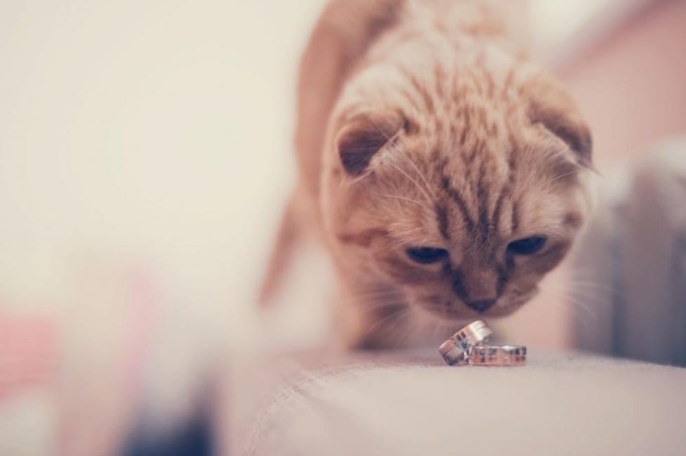 pareja viajó 4000 kilómetros para casarse en un lugar muy especial- refugio para gatos
