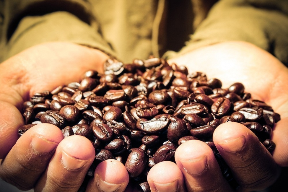 Usar café para mejorar tu jardín o huerto- café
