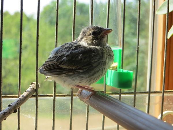 bird-day13