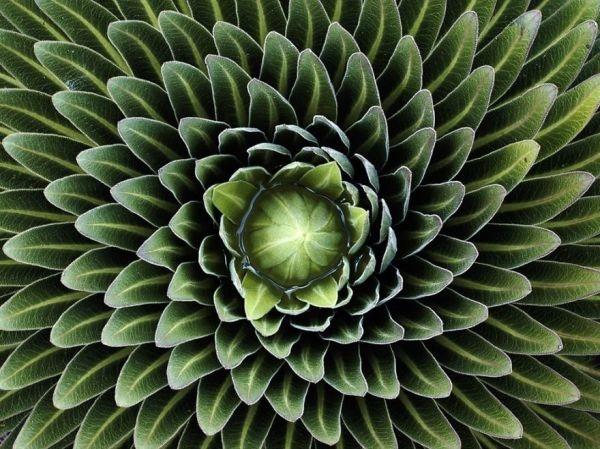 plantas-geometricas-5