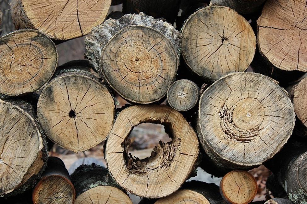 Transformar un tronco en una cocina de exterior - leños