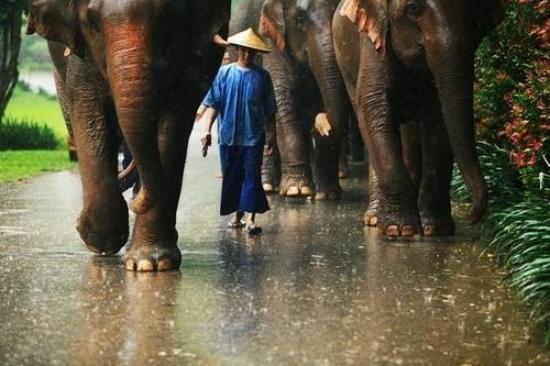 comenzar de nuevo viajando caminando con elefantes en Tailandia