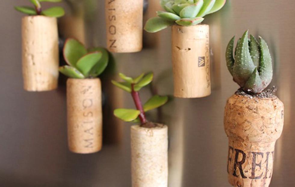 cosas que puedes hacer con un corcho- plantar