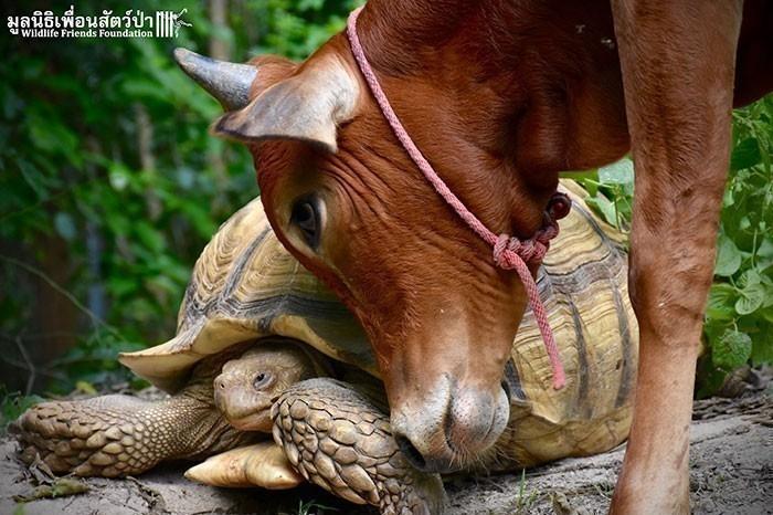 10 historias de amor y amistad entre diferentes especies