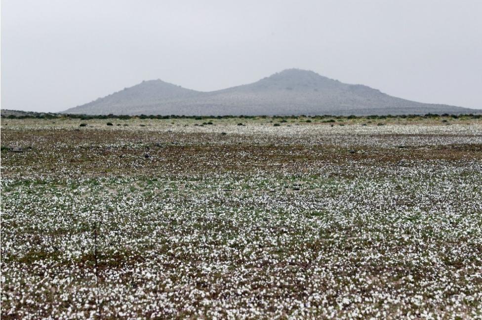 Enla actualidad, el desierto flórido esta relacionado a El Niño