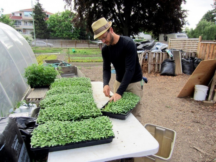 Curtis Stone- agricultura urbana