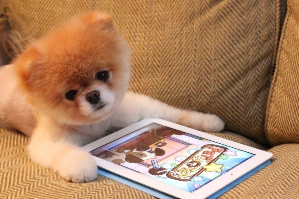 mascotas bienvenidas app