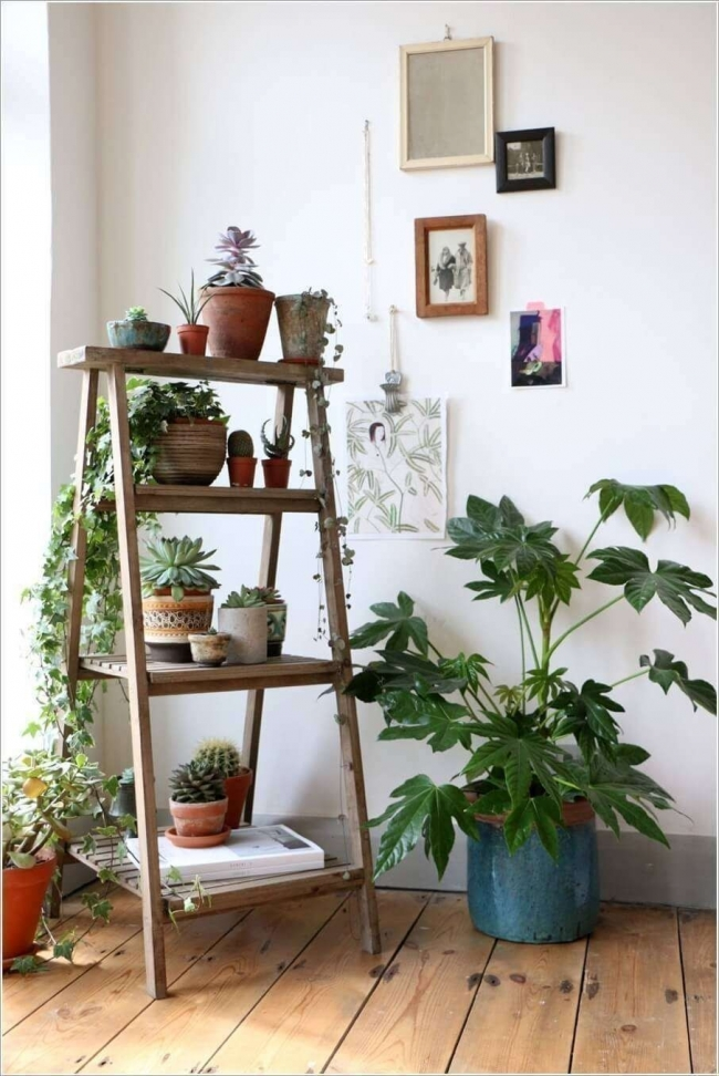Ideas para decorar con plantas - estante escalera