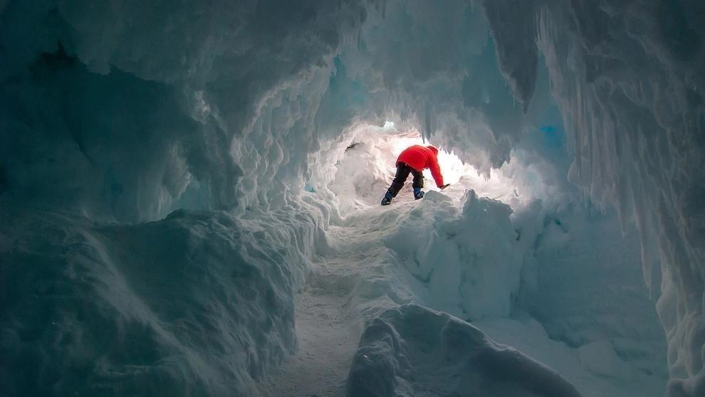 La Antártida pudo haber actuado como microrefugio glacial para una amplia gama de especies