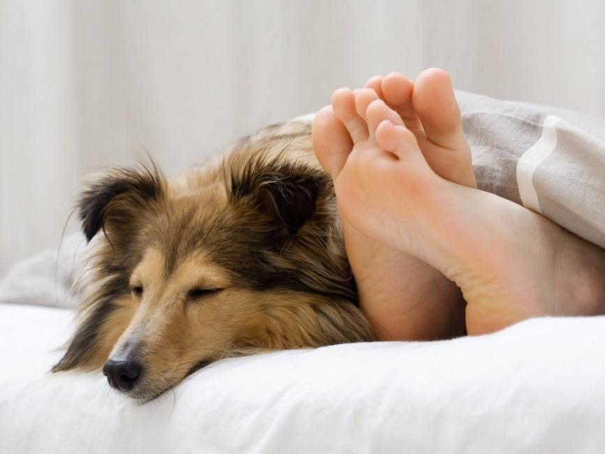 Dormir con mascotas - pies
