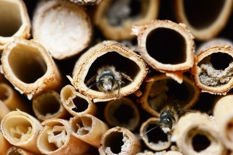 historia abejas persiguen coche