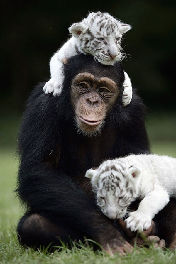 unusual-animal-friendship-15-2