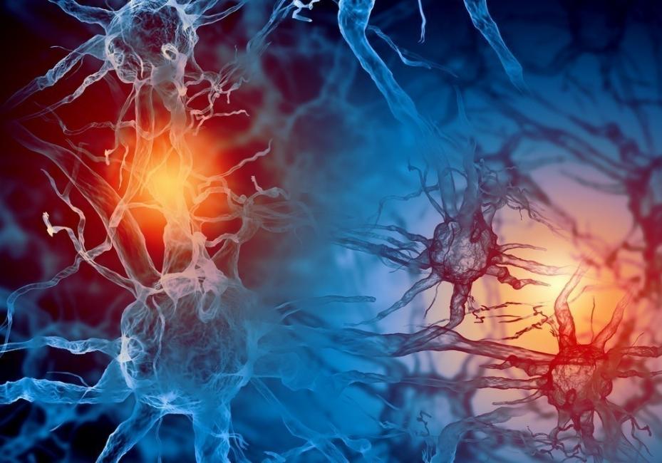 disruptores endócrinos- químicos en el cuerpo
