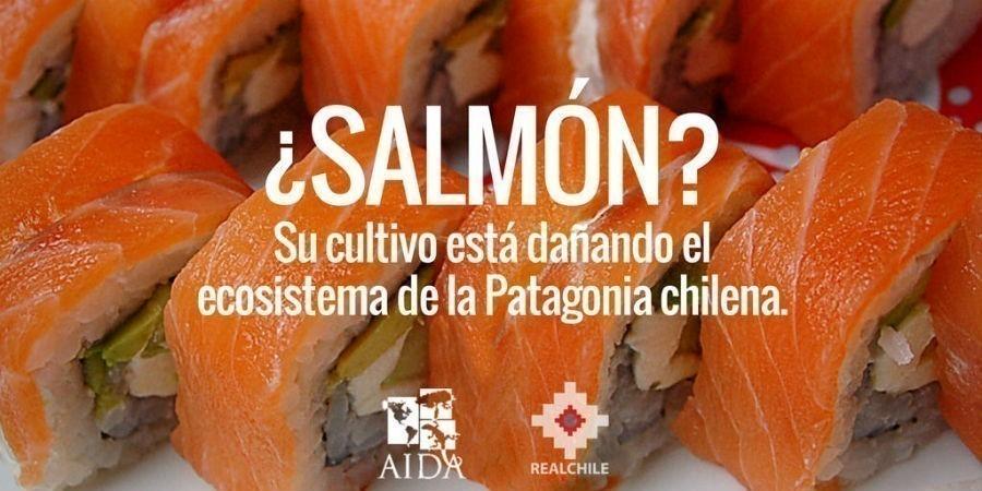 AIDA y Real Chile lanzaron una campaña para proteger a la Patagonia chilena de los daños de la salmonicultura