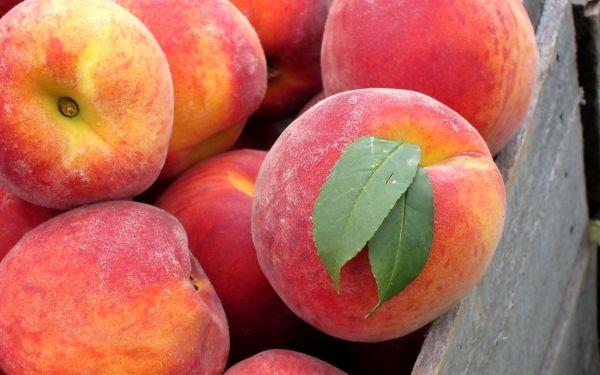 fruit-peach-wallpaper-20691-21559-hd-wallpapers