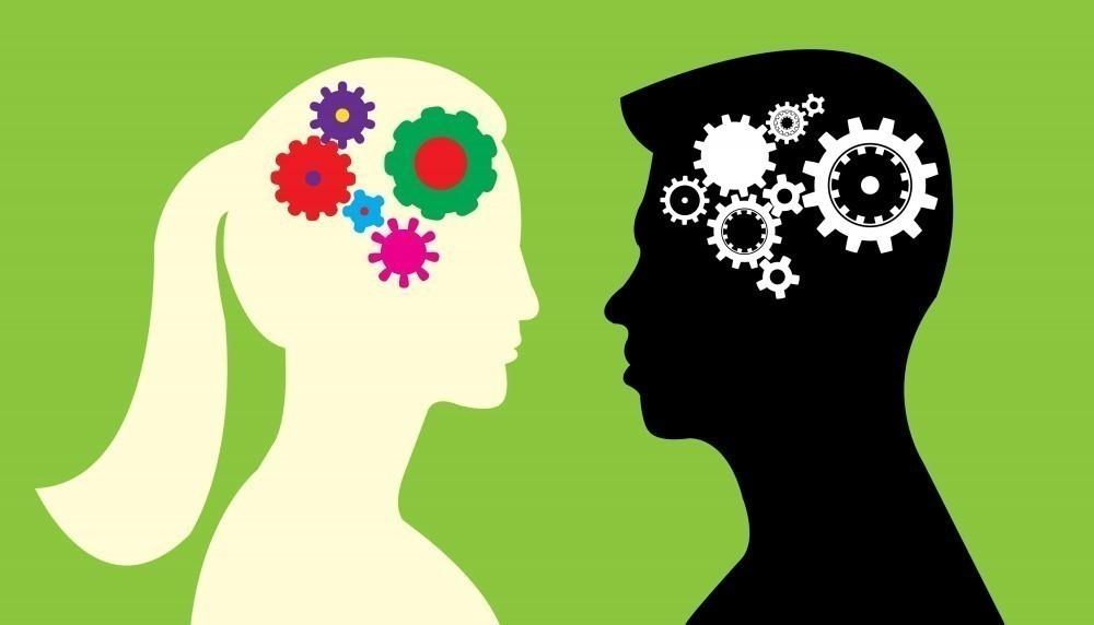 El cerebro se encuentra protegido por el cráneo y tiene la misma estructura general que el cerebro de otros mamíferos