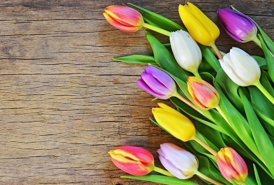 Flores y personalidad- tulipán