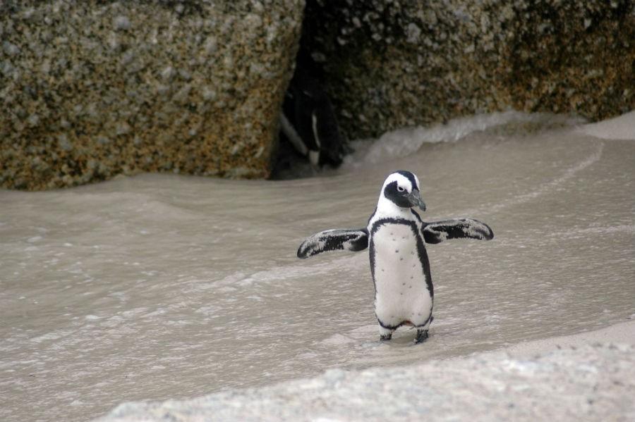La Patagonia chilena alberga especies protegidas como el pingüino de Magallanes