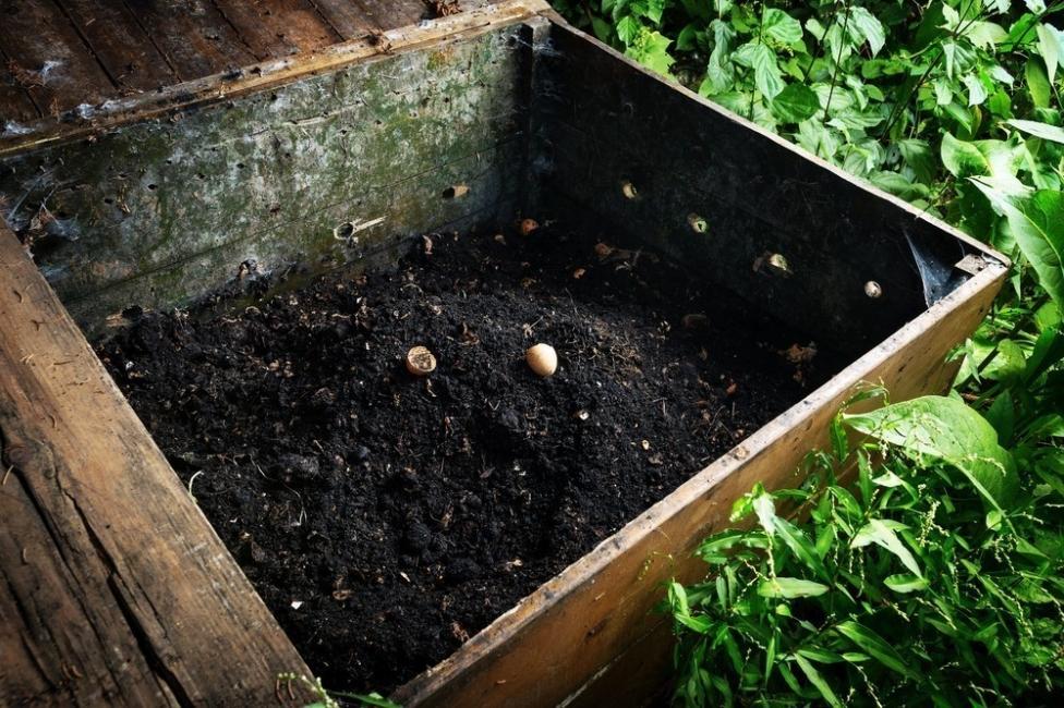 café - compost
