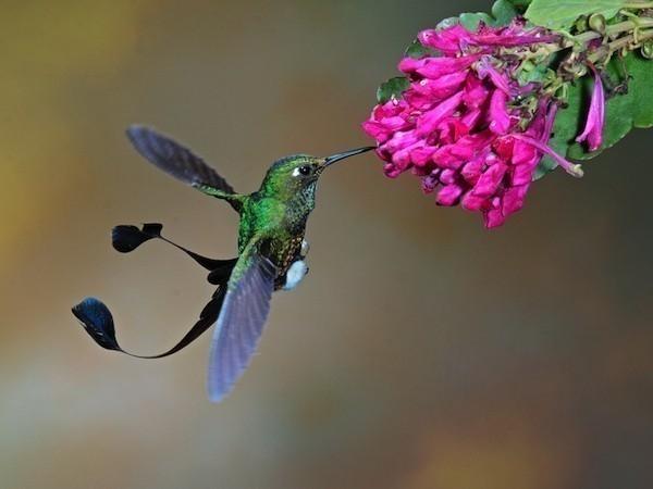 bebedero - colibrí