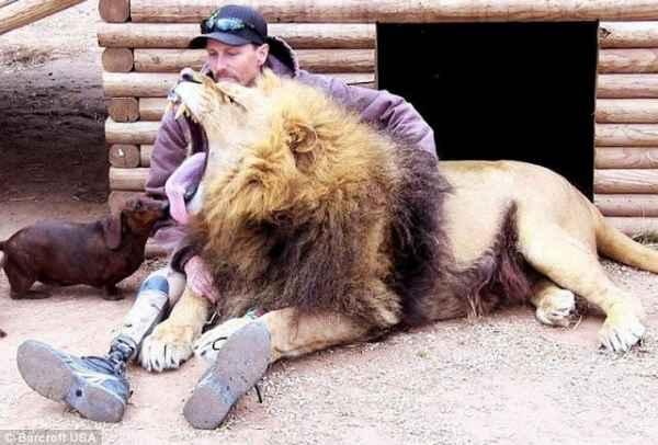 increible-amistad-un-perro-salchicha-un-leon--L-ZxHOrn