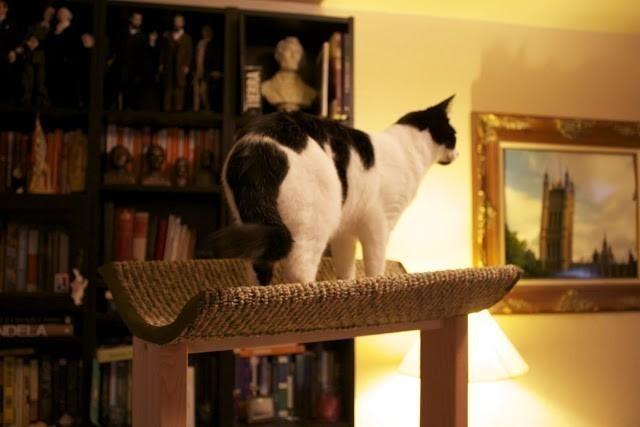 torre para gatos- terminado