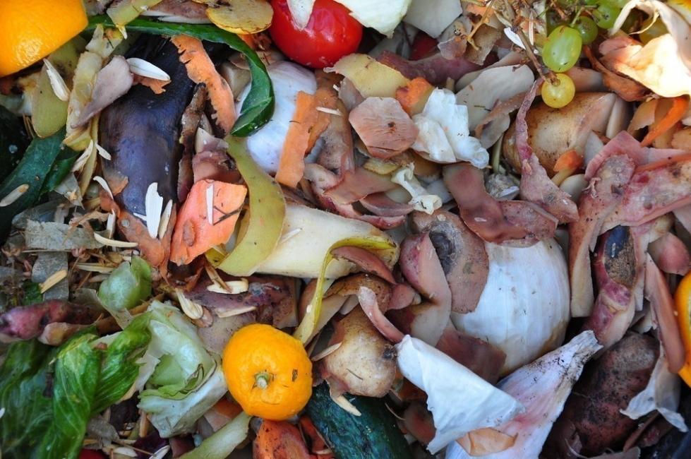Ley prohibe tirar alimentos a la basura