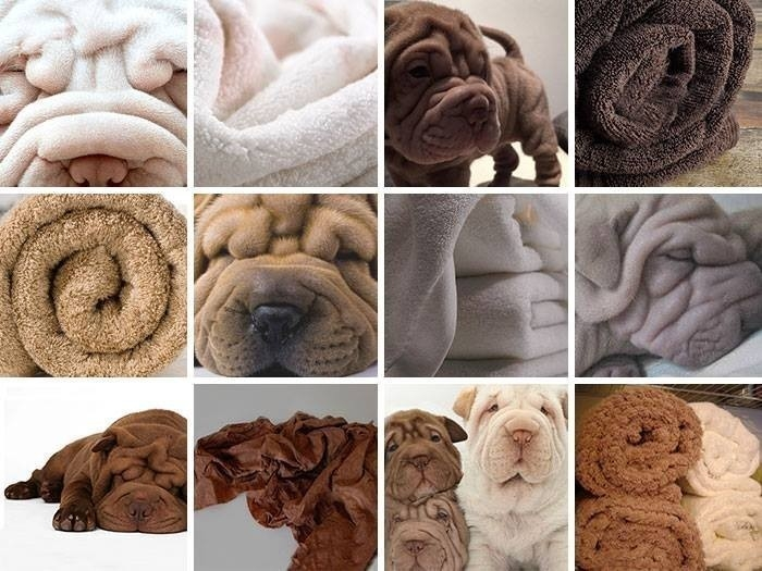 animales que parecen objetos por Karen Zack- perro