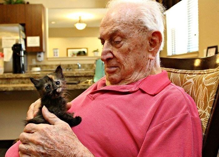 Este hogar de ancianos regala su amor a un refugio de gatitos recién nacidos