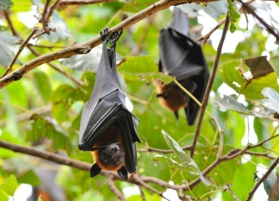 Como evitar murciélagos en el departamento