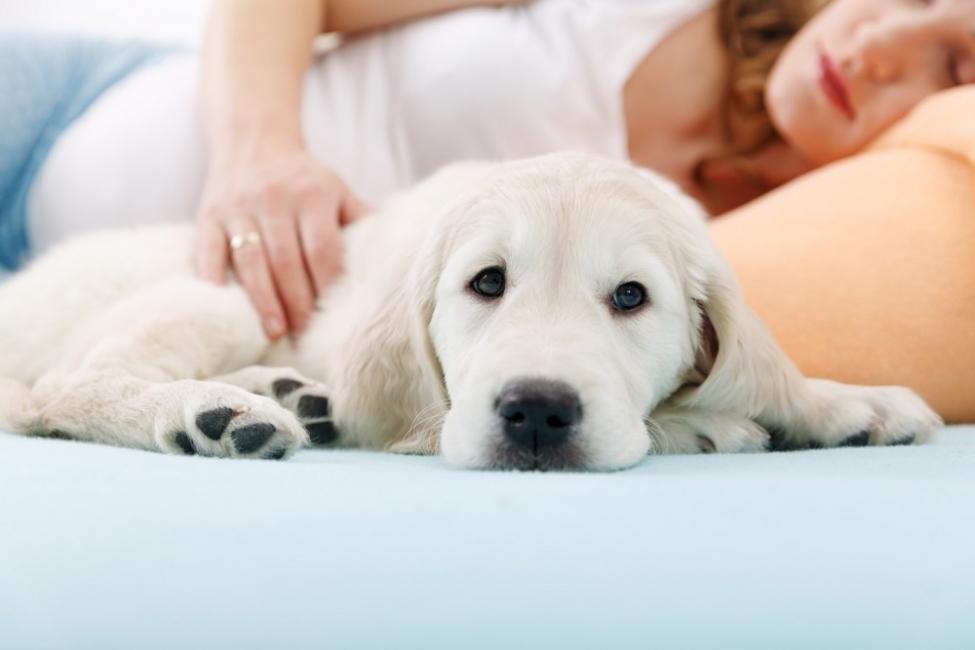 beneficios de tener un perro durante el embarazo- comprensión