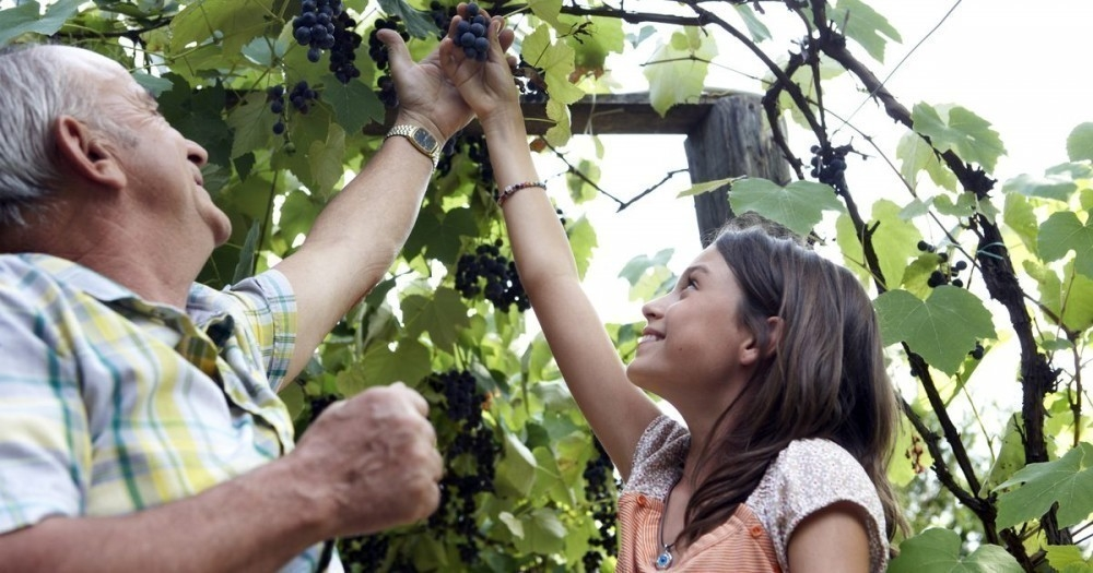 consejos y cuidados para cultivar uvas en casa