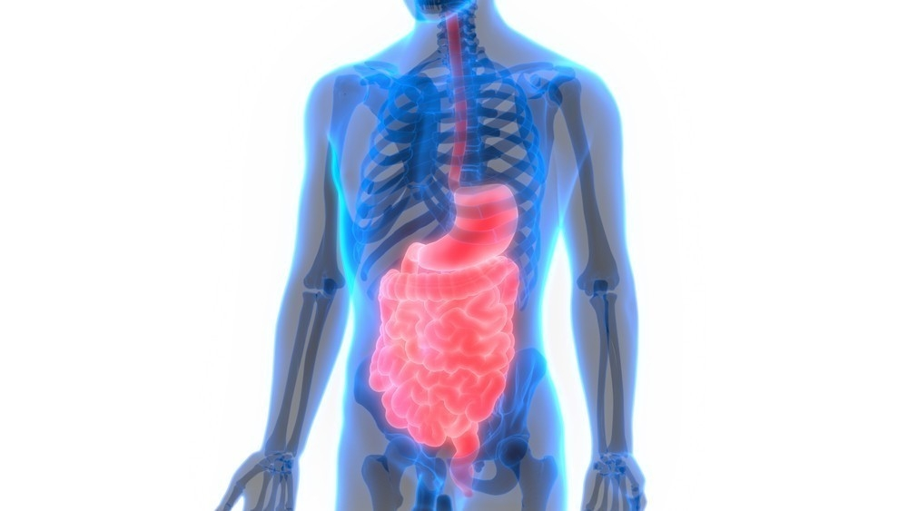 Alimentos sistema digestivo