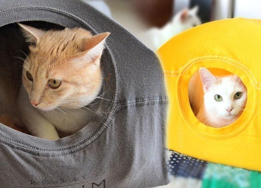 Ideas para hacer con una vieja remera - tienda para gatos