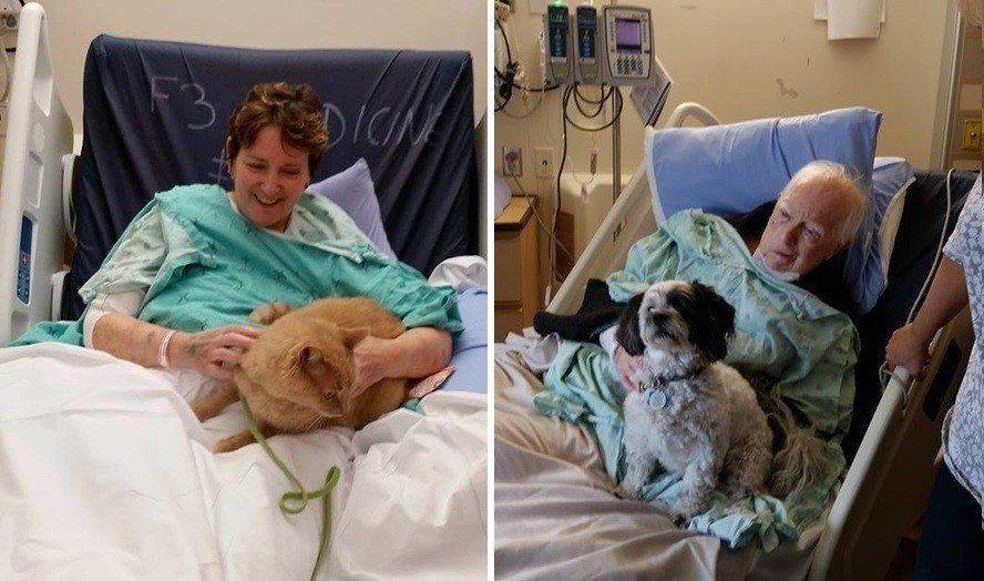 mascotas visitan personas en el hospital Juravinsky- cuidadores y mascotas