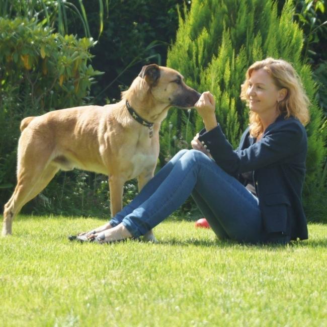 perro  - historia amor animal- cuidador