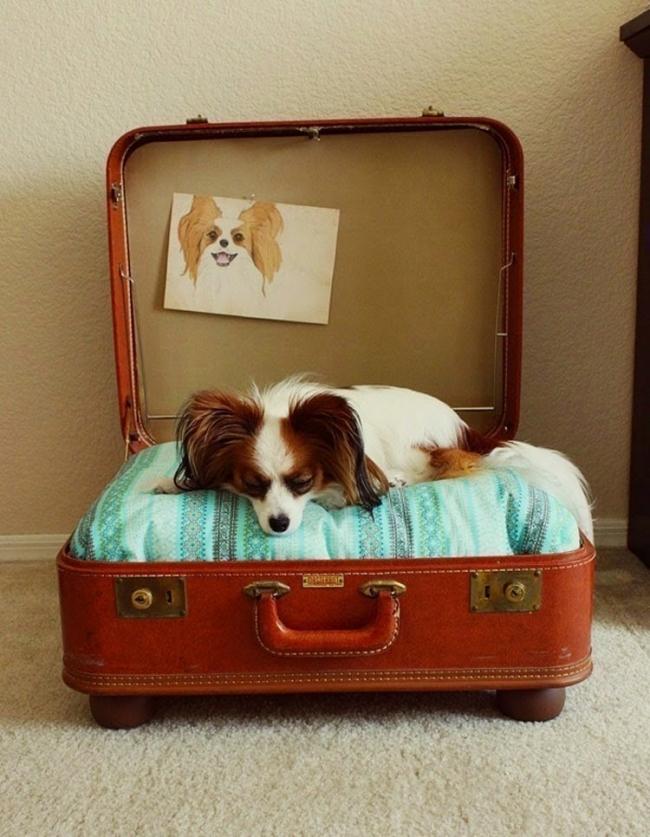 decoración con maletas - cuna para perro