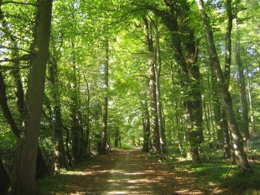 Día Internacional de la Vida Silvestre- bosque