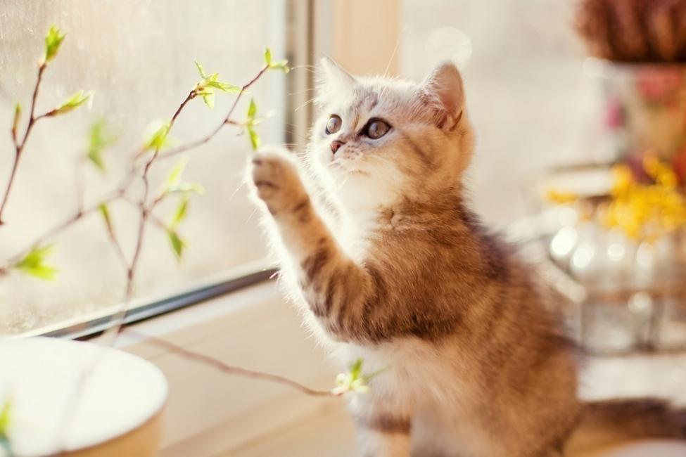 beneficios de tener un gato para la salud - reir