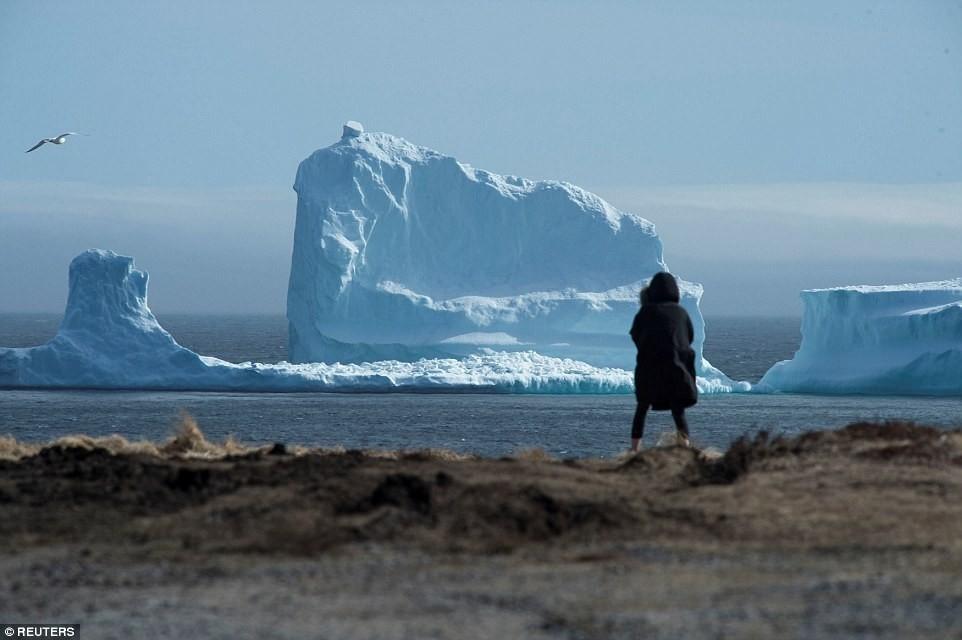 iceberg en Ferryland