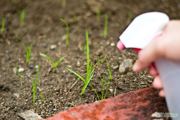 670px-Kill-Weeds-With-Vinegar-Step-2