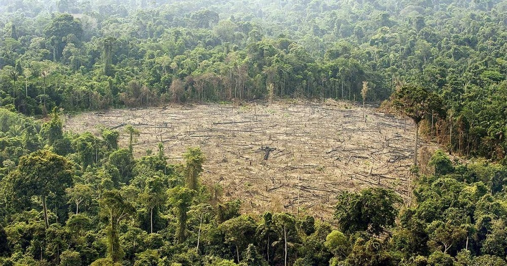 deforestación - dia internacional de los bosques