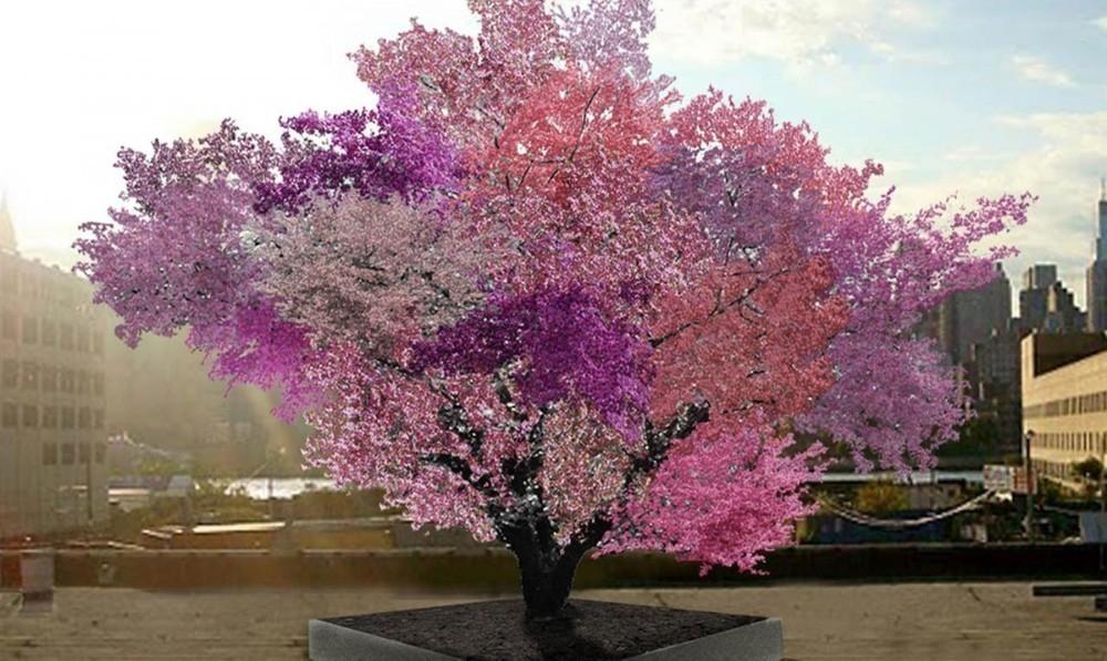 El increíble árbol donde crecen más de 40 tipos de frutas