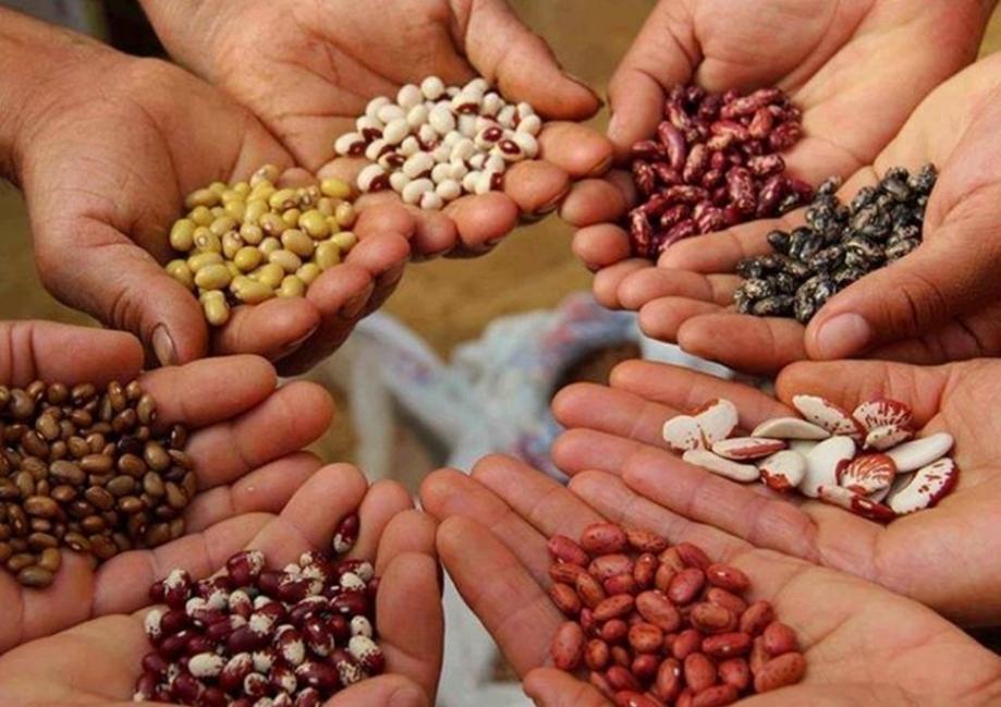 ley de semillas - lo que está en juego